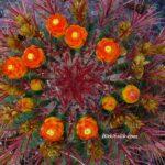 Turuncu Çiçekli Meksika Ateş Varil Kaktüsü